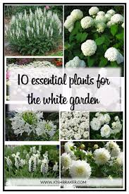 10 essential plants for the white garden flower gardening