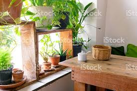 window table for plants table side the window and plants pot stock photo more pictures of