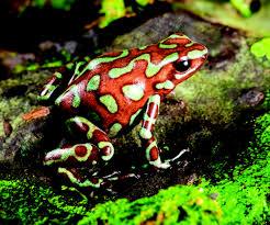 frog medicine u2013 doowans news u0026events