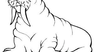 coloring page for walrus walrus coloring page copertine info