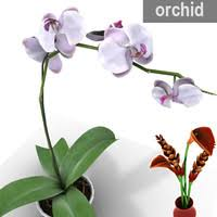 Flower Orchid Orchid Flower 3d Max