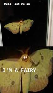 Moth Meme - moth dude let me in i m a fairy know your meme