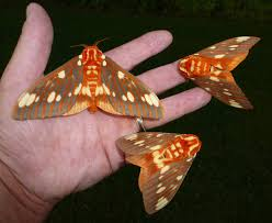 7 things you don u0027t know about moths but should