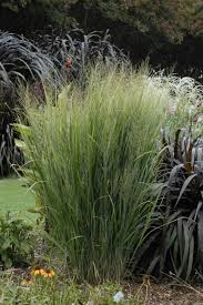 13 terrific grasses hgtv