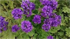 houston flowers northern interior columbia flowers blooming in the