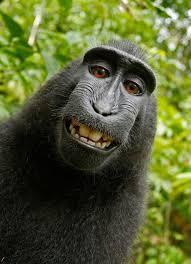 Funny Monkey Memes - funny monkey memes imgflip