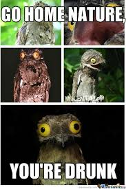 Potoo Bird Meme - this is a real bird called potoo by cedestroyer meme center