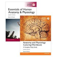 Human Anatomy And Physiology Books Booktopia Value Pack Essentials Of Human Anatomy U0026 Physiology