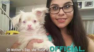 lucky the one eyed albino puppy survives being born to a backyard