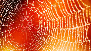 this spooky halloween spider web craft for kids is scary easy to