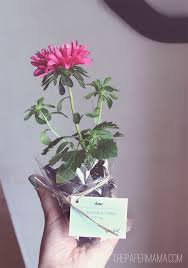 Flower Favors by Best 25 Plant Wedding Favors Ideas On Succulent
