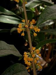 Highly Fragrant Plants Easy Fragrant Plants