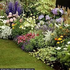 hosta garden layout ideas google search hostas pinterest