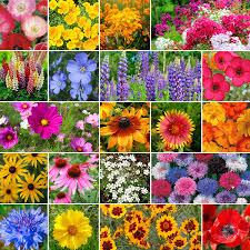 garden of eden flower shop heirloom seeds non gmo vegetable herbs u0026 flower seeds