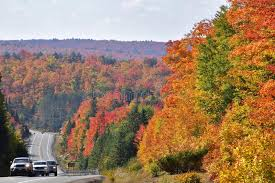fall colours algonquin park ontario stock image image 79317451