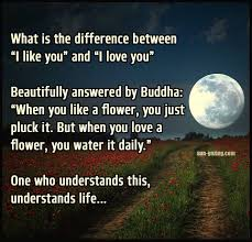 Flower And Love Quotes - 14 best buddha quotes images on pinterest buddha quote buddhism