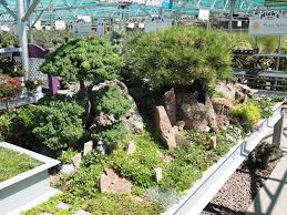 Rock Garden Features Our Rock Garden Display With A Tanyosho Pine And Topiary Juniper
