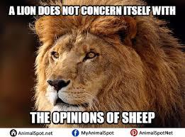 Lion Meme - lions meme different types of funny animal memes pinterest