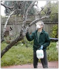 spraying dormant on fruit trees gardening