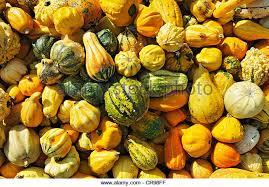 ornamental gourds stock photos ornamental gourds stock images