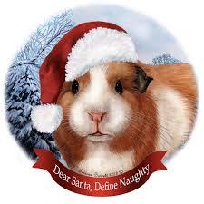 pet gifts american guinea pig santa hat