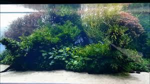 Takashi Amano Aquascaping Techniques Florestas Submersas By Takashi Amano Youtube