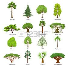 cedar tree stock photos royalty free cedar tree images and pictures