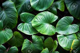 green plants green plant stock photo picture and royalty free image image