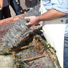 cuisiner des ormeaux l huître et l ormeau finistère tourisme 29