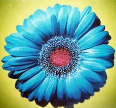 blue flower blue flower a gallery on flickr