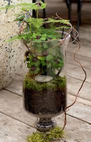 Terrain Home Decor by 42 Best Terrain Terrariums Images On Pinterest Glass Terrarium