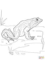 goliath frog coloring page free printable coloring pages