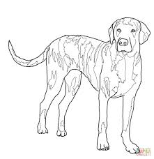 fox hound coloring pages print kids coloring