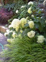 japanese garden ideas of japanese mountain grass home dezign