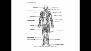 basic anatomy and physiology study guide website inspiration human