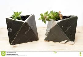 beautiful houseplants in geometric artistic pots stock photo