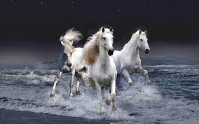 hairstyles for horses hairstyles 2011 news white horses wallpaper best white horse