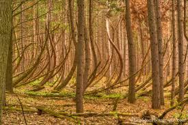 cedar trees michigan in pictures