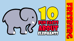 top 10 fun facts about elephants for kids learn about animals