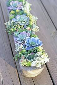 succulent arrangements how to make the diy artificial succulent arrangement