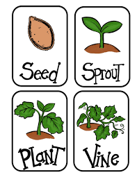 18 life cycle of a pumpkin sequencing worksheet free