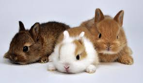 life spans of different rabbit breeds you must know