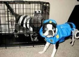 Halloween Costumes Dogs Cutest Puppy Costumes 2011 215 Ridiculous Dog Costumes Images Dog