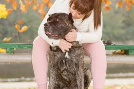 american eskimo dog growth chart cane corso dog breed information pictures characteristics u0026 facts
