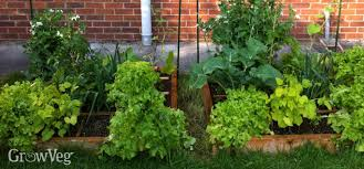 Square Foot Garden Layout Ideas Planning A Square Foot Vegetable Garden