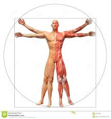 The Human Anatomy Pictures Old Vintage Anatomy Charts Of The Human Body Stock Photo Image
