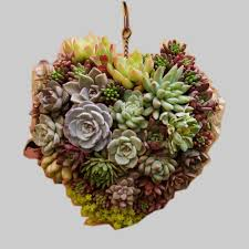 Hanging Succulent Planter by Online Get Cheap Hanging Wall Planter For Succulents Aliexpress