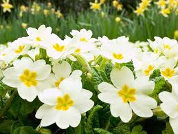 Image Of Spring Flowers by Spring Flowers Images Wallpaper 1600x1200 66684