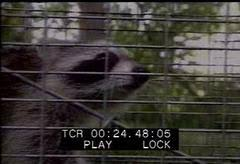 design fh dã sseldorf animal attacks stock footage footage net