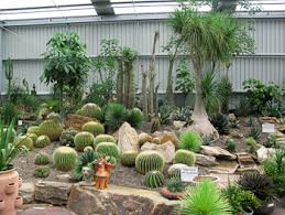 cactus landscaping landscaping ideas with cactus interior